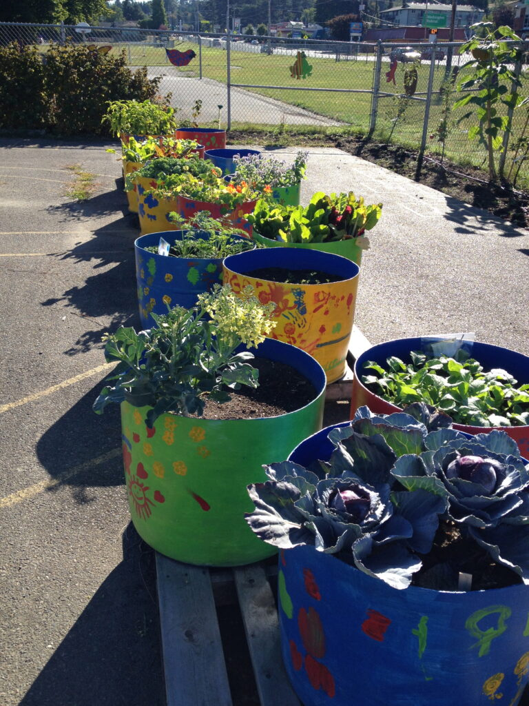 A row of round planters with plants in the sunshine