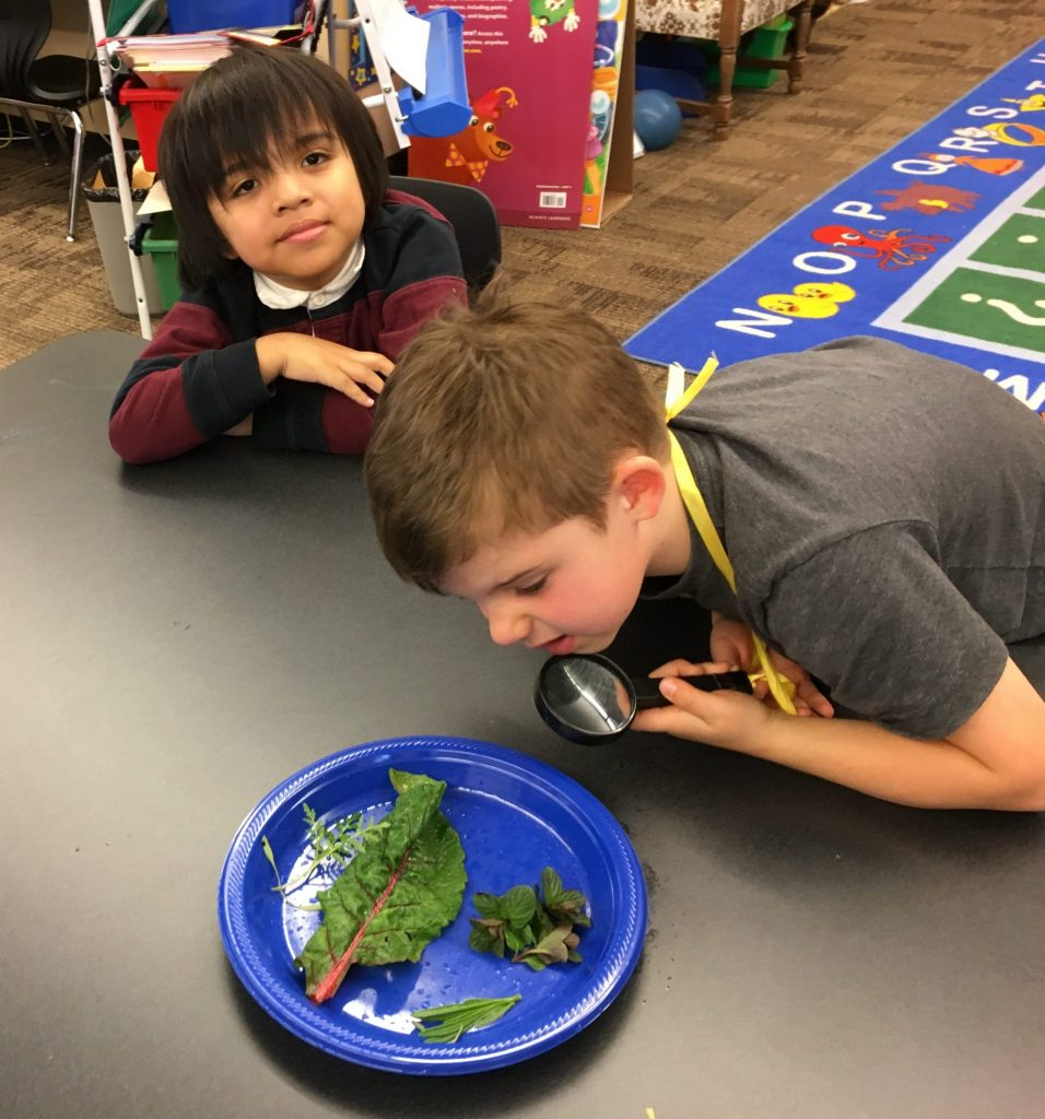 Two boys looking at plant leaves