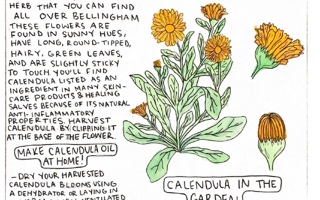 Learn about Calendula!