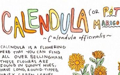 Learn about Calendula!