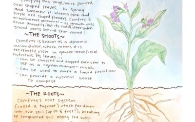 Learn about Comfrey!
