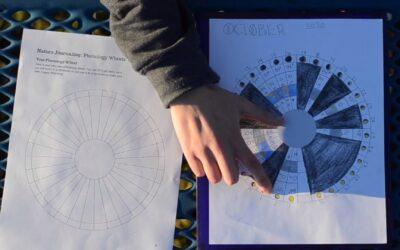 Phenology Wheels