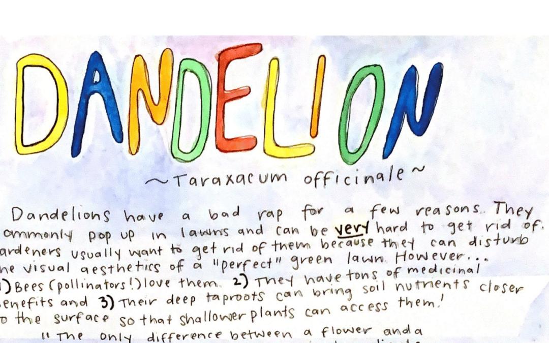Learn about Dandelion!