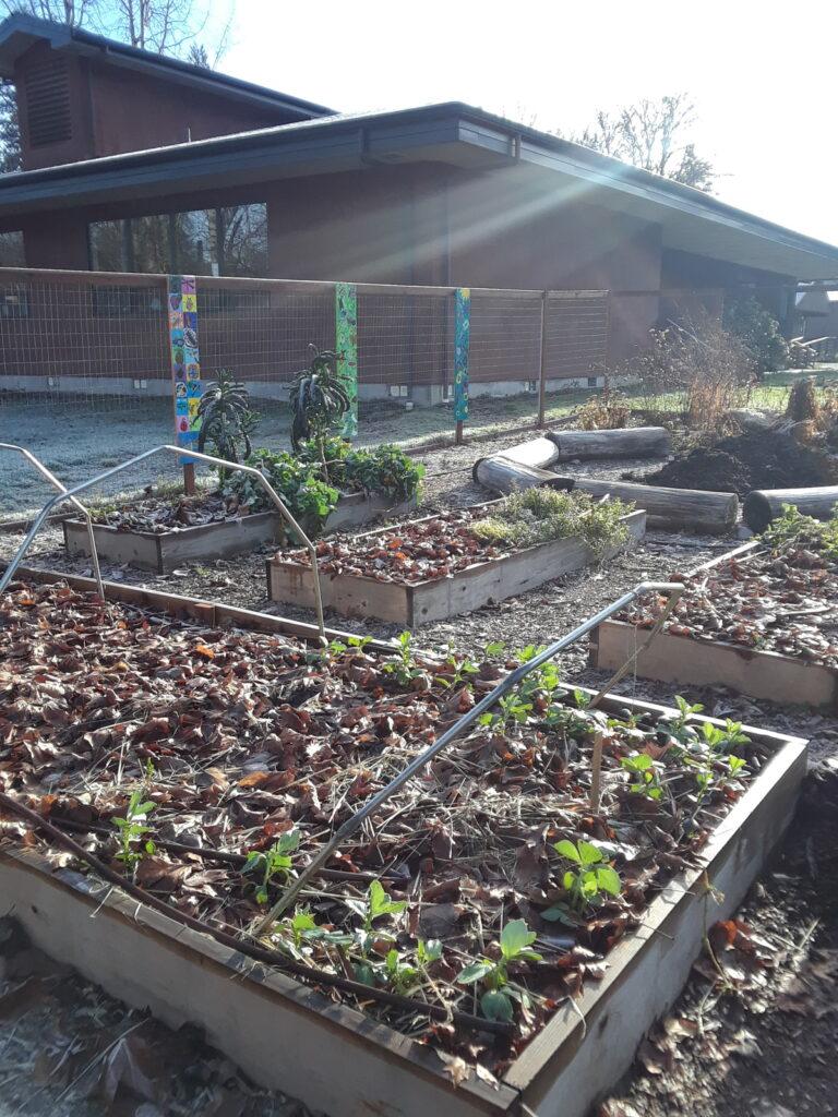 Garden beds in sun rays.