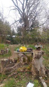 Graydon reclining in the garden