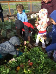 Parkview Elementary   Common Threads Farm