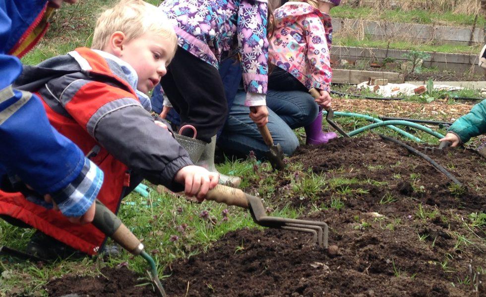 Spring break camp preschool in the garden, digging up weeds!