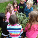 Kids looking at plants